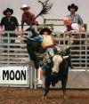 No bull: Top riders returning to Tucson