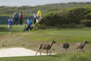 Photo of the day: Pebble Beach
