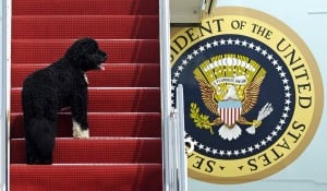 Meet Sunny, Bobama's new White House pal