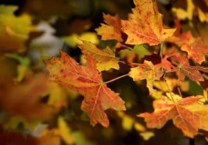 Handy guide to finding fall foliage