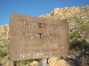Ariz. wildlife agency delays information on bighorns