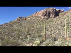 Watch: A hike in Pima Canyon