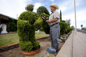 Topiary artist shows shear talent