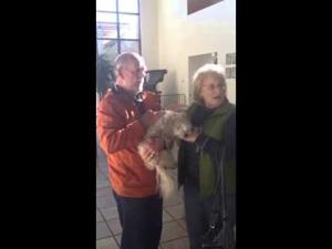 Mr. Waffles the dog reunites with his family after escaping a stolen vehicle