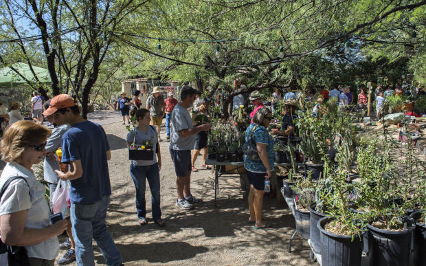 Weird Plant Sale At Tucson Botanical Gardens Features Uncommon Plants
