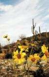 Wildflowers Forecast: spotty