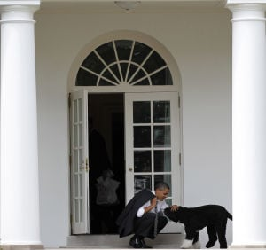 Photos: Bo the White House dog