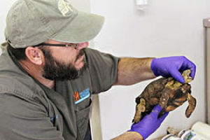 Desert tortoises need adoptive homes