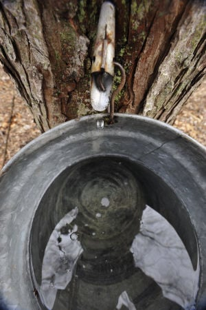 Photos: Tapping for maple syrup