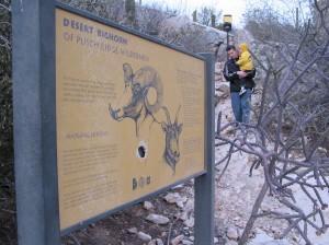 Catalina bighorns are gone, but explanatory signs live on