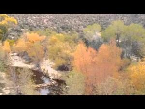 Autumn color dazzles in Sabino Canyon