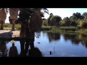 Agua Caliente Park: on the rebound!