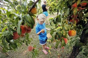 Photos: Pick your own