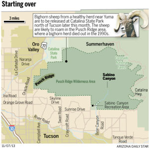 Pusch Ridge: new home to bighorns