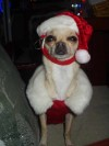 Tucson's holiday pets