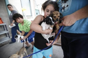 Prop. money would rebuild Pima County animal shelter