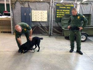 Last day: Surveillance and service dogs