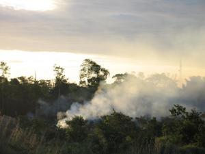 Brasil: disminuye 18% deforestación en Amazonia