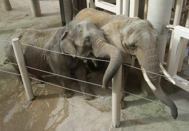 Zoo plans to split elephants in return for breeding herd for David sanders home designs