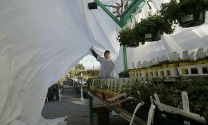 Hard freeze alert tonight: Protect your plants