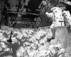 Torn glove halts astronaut's spacewalk