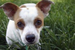 Photos: Adopt a friend