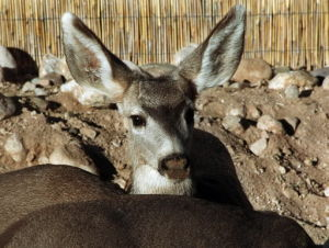 Rewards being offered in poaching of 5 deer