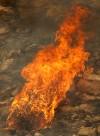 Aspen Fire recovery