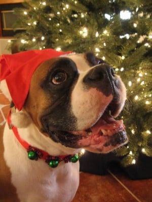 Last day to vote in Santa, pet contests
