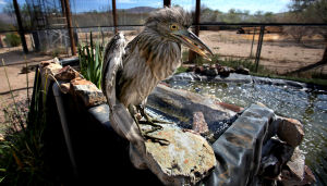 Photos: Tucson Wildlife Center