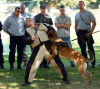 Police Dog Training