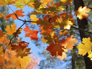 Autumn leaves flush Catalinas with color