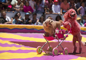 Photos: Mexico's 'circus wars'