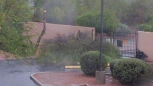 Storm topples trees throughout Tucson area