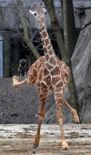 Animal shots of the week
