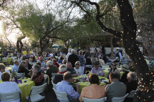 Sonoran desert wildflowers celebrated at Tohono Chul