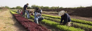 Award-winning food systems documentary premiers on tucson.com
