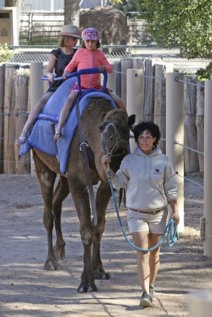 Zoo closes camel rides after infection