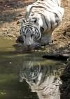India Zoo