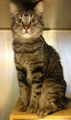092613-nw-pets-p1
