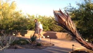 The Tucson Experience: Tohono Chul Park bloom night