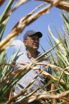 Rising corn prices could show up at the grocery store