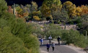 Find autumn color on a Sabino Canyon hike