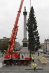 Britain Christmas Tree
