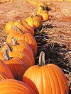 Pumpkins: Large, orange, incredibly versatile delicacies