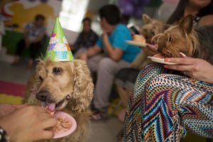 Photos: Mexico's middle-class dogs