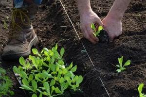 Gardening - State Point Media