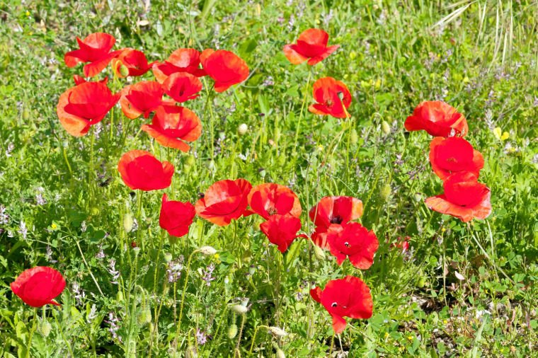 Start spring wildflowers this month