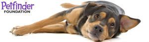Petfinder Foundation dog