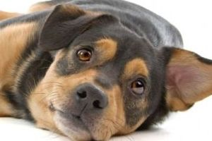 Petfinder Foundation Dog - Petfinder foundation